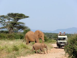 4 Days Fascinating Budget Safari in Kenya