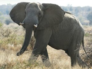 5 Days Greater Kruger and Kruger National Park Safari