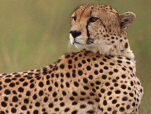 5 Days Northern Tanzania Outstanding Camping Safari