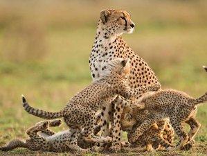 2 Days Family-Friendly Budget Safari in Mikumi National Park, Tanzania