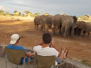 13 Days Budget Safari South Africa, Mozambique, Zimbabwe, and Botswana