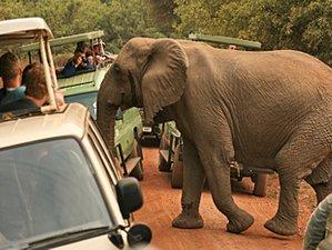 4 Days The Best of the Northern Circuit Safari in Tarangire, Serengeti, and Ngorongoro, Tanzania