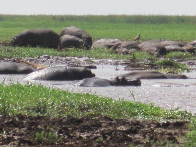 7 Days Tarangire, Ngorongoro, and Serengeti Safari in Tanzania