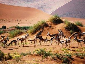 6 Days Camping Safari in Namibia