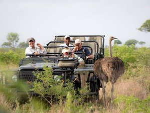 2 Days Treehouse Safari South Africa