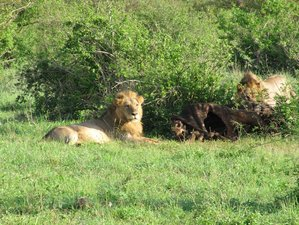 4 Days  Best  Safaris in Kenya