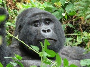 16 Days Intensive Adventurous Safari in Uganda and Rwanda