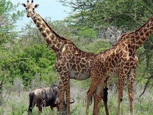 3 Days Intriguing Safari in Ruaha National Park, Tanzania