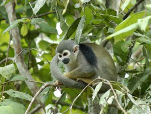 5 Day The Expedition Tour Safari in Tamshiyacu Tahuayo Communal Regional Conservation Area, Loreto