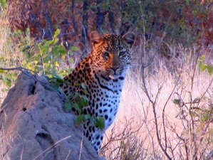 7 Days Kruger National Park Safari South Africa