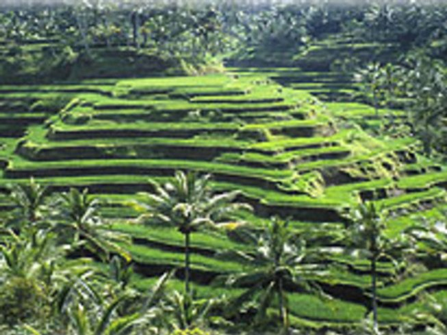 5 Days Balinese Cooking School Vacations