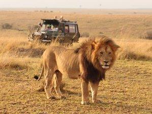 3 Days Group Safari in Masaai Mara National Reserve, Kenya