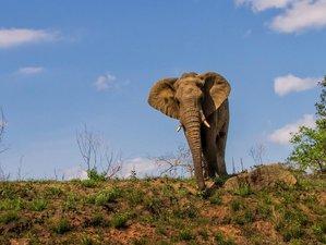 7 Days Exceptional Wildlife Safari in Kenya