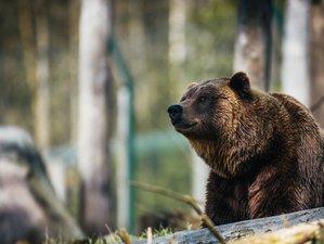 Avistamiento de osos