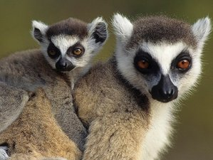 15 Days Ultimate Photography Safari in Madagascar
