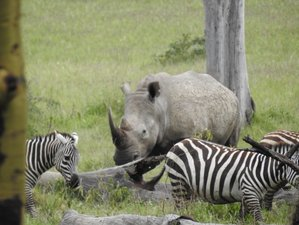 5 Days Thrilling Safari in Maasai Mara, Lake Naivasha, and Lake Nakuru, Kenya