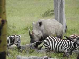 5-Daagse Geweldige Safari in Masai Mara, het Naivashameer en het Nakurumeer, Kenia