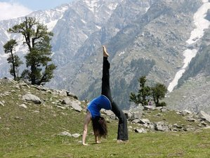 27 Days 300-Hour Yoga Teacher Training in Dharmasala, India