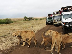 4 Days Budget Safari in Masai Mara, Lake Naivasha, and Hell's Gate, Kenya
