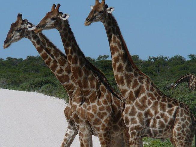 10 Days Classic Kenya and Uganda Safari
