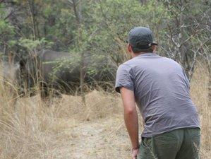 4 Days Matobo National Park Luxury Safari in Zimbabwe