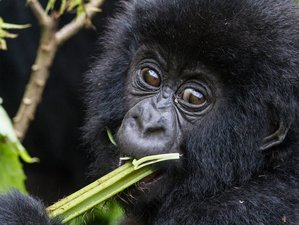6 Days Gorilla Trekking Photography Safari in Rwanda