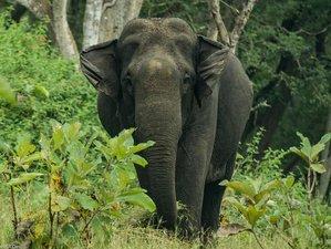 4 Day Wildlife Safari in Tamil Nadu