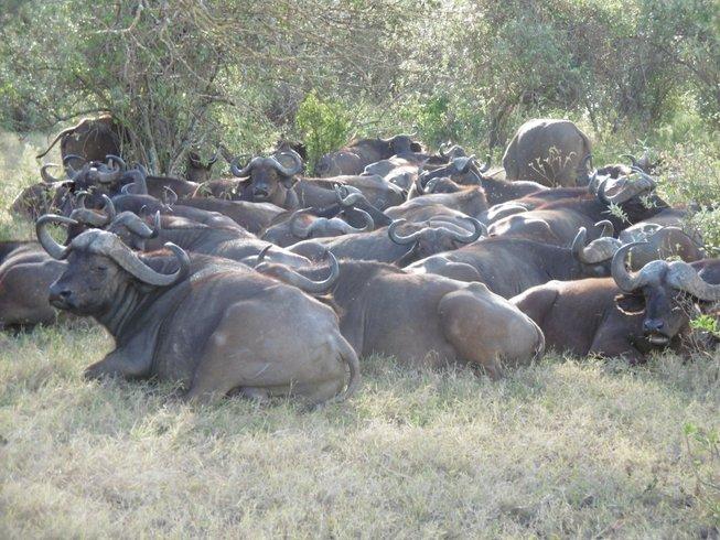 12 Days Great Budget Holiday Best of Kenya and Tanzania Safari