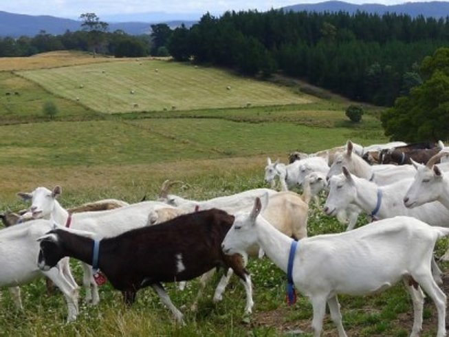 7 Days Food and Wine Holiday in Tasmania