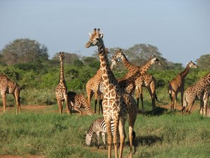 3 Days Luxury Safari in Kenya