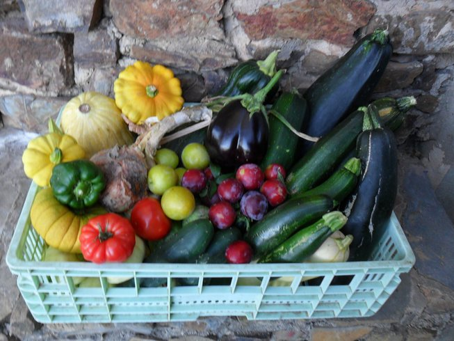 5 Days Vegetarian Cooking, Foraging Tour in Portugal