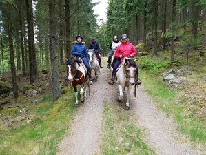 6 Days American Style Ranch Adventure and Horse Riding Holiday in Slöinge, Sweden