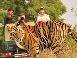 5 Day Jungle Safari in Bardia National Park, Bheri Zone