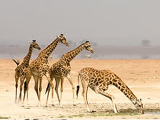7 Days Classic Kenya Safari