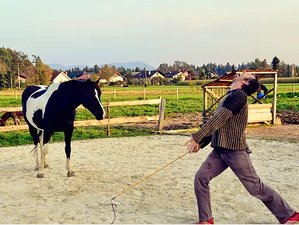 6 Days Dance with Horses and Meditation Retreat in Radomlje, Slovenia