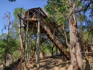 6 Days Exhilarating Treehouse Budget Safari in Kruger National Park, South Africa