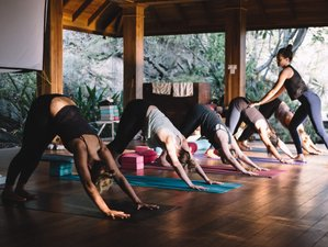 22 Days 200-Hour Yoga Teacher Training Course in New South Wales, Australia