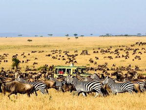 8 Days Camping Tanzania Safari