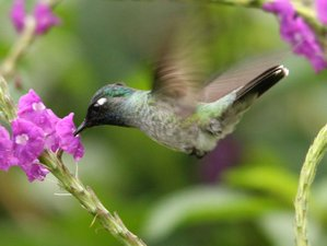 4 Day Peruvian Amazon Birdwatching Safari in San Juan de Yanayacu, Loreto