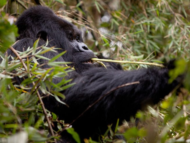 13 Days Wildlife Safari in Tanzania and Rwanda