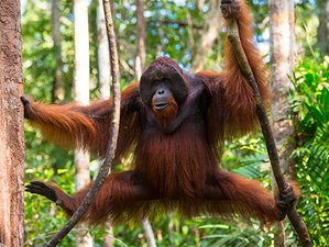 7 Day Sweet Memories Wildlife Tour in North Sumatra, Indonesia