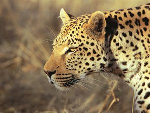 7 Days Marek Adventure and Safari in Northern Namibia