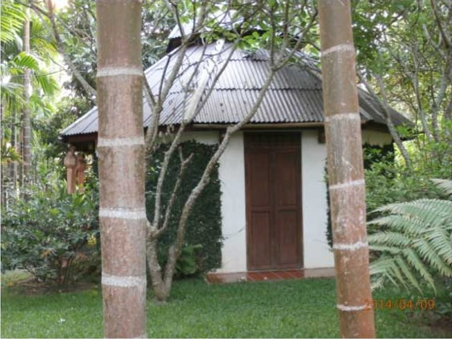 7 Days Meditation and Yoga Retreat Thailand