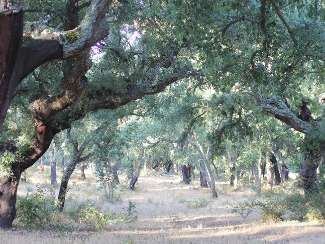 5 Days Woodland Yoga Retreat in Alentejo, Portugal