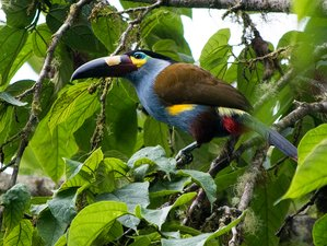 8 Day Wildlife Tour from the Andes to the Sea Cost in Ecuador