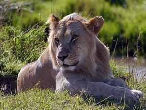 12 Days Migration Safari in Kenya and Tanzania, East Africa