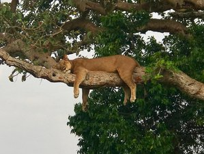 2 Days Safari in Murchison Falls National Park, Uganda