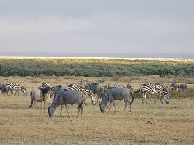 6 Days Kenya Safari in Maasai Mara, Lake Nakuru, and Amboseli