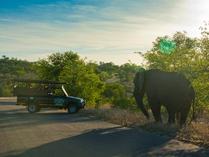 3 Days Budget Safari, Kruger National Park, South Africa