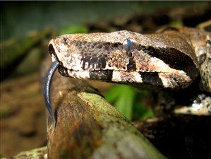 3 días de ruta amazónica de supervivencia en la selva y vida salvaje en Manaos, Brasil